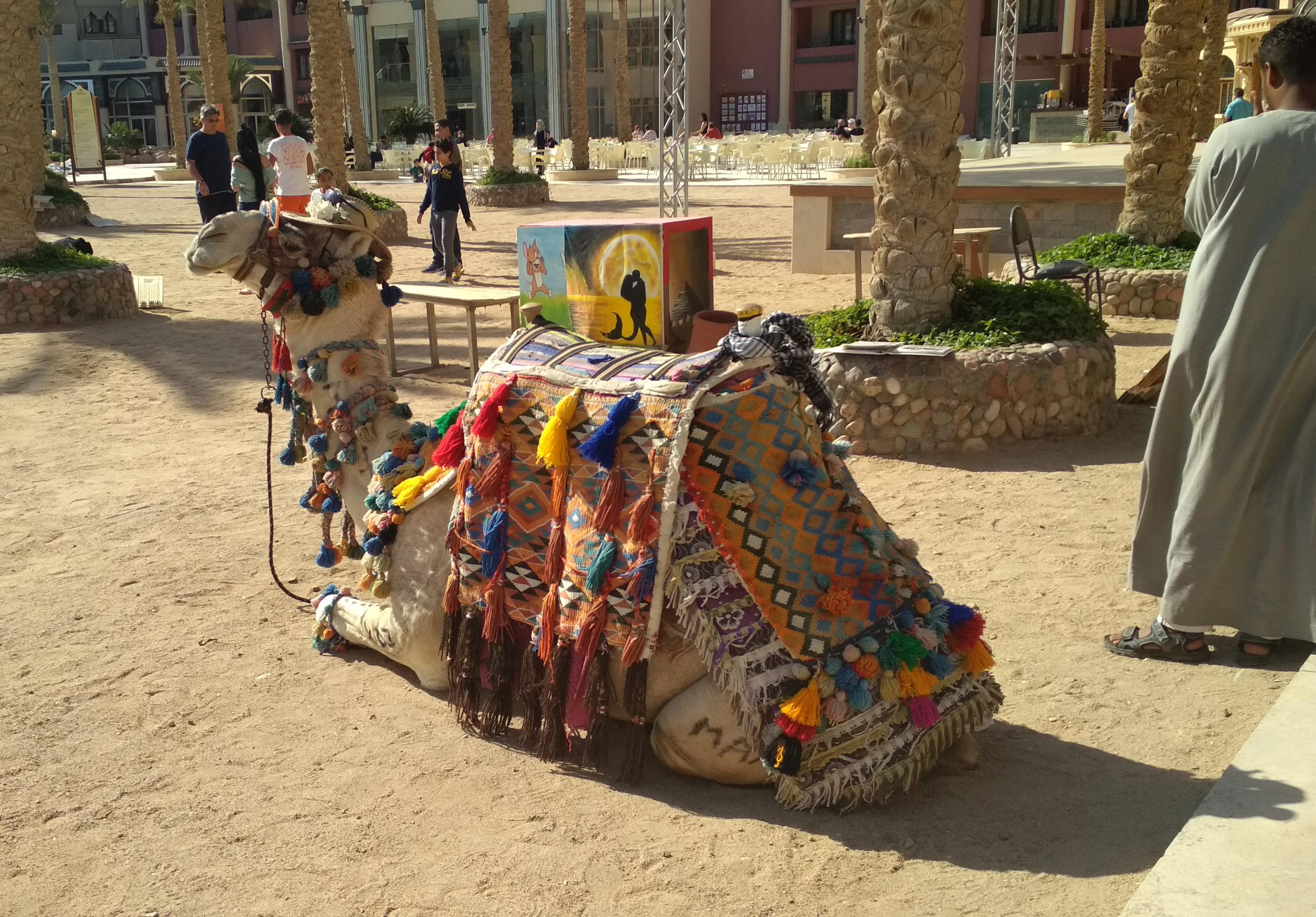 Отзыв Алексея — Египет